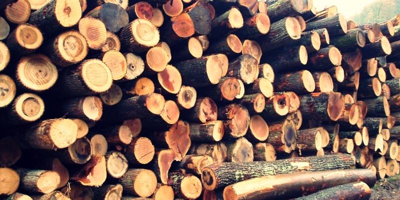 Mathi Wood