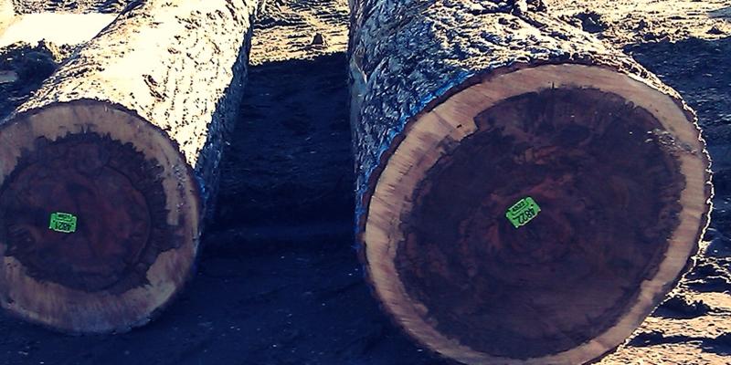 Gumsal Wood