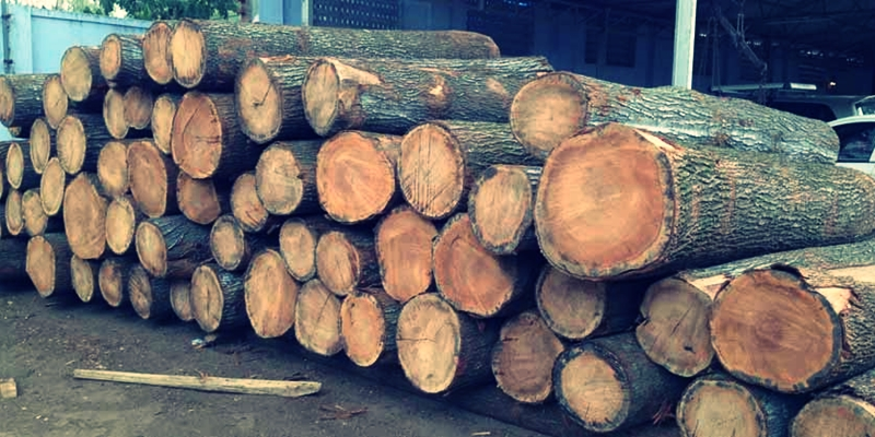 Silver Oak Wood