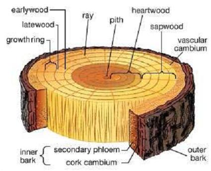 woodstruc