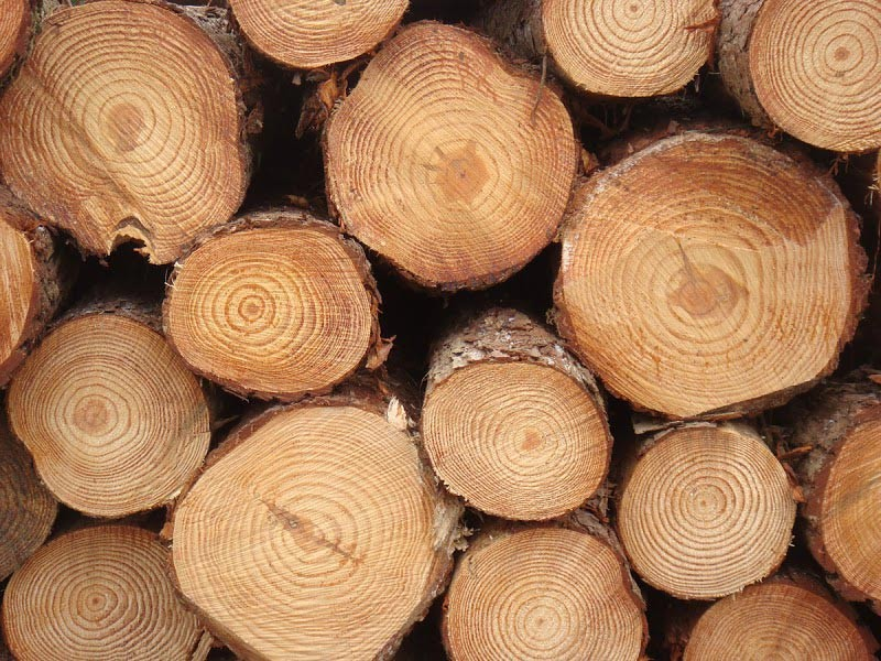 Pine-Logs-From-South-Africa